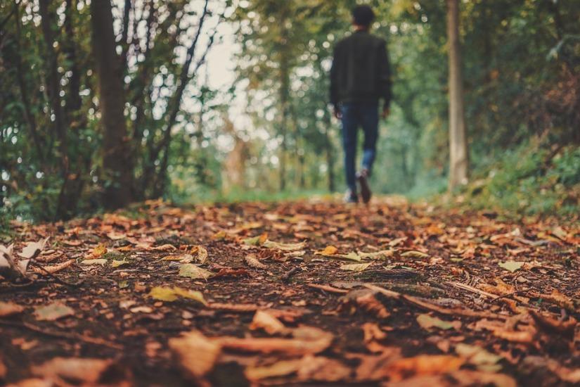 autumn-1869160_960_720.jpg