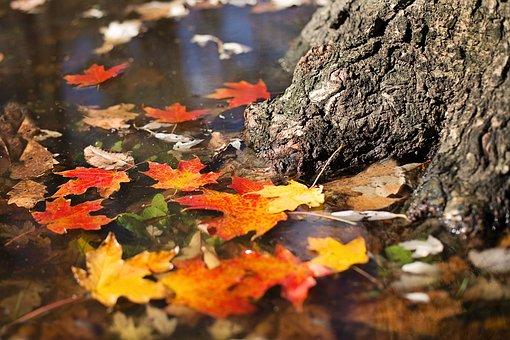 autumn-2900166__340.jpg