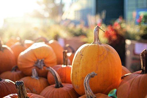 pumpkins-2871269__340